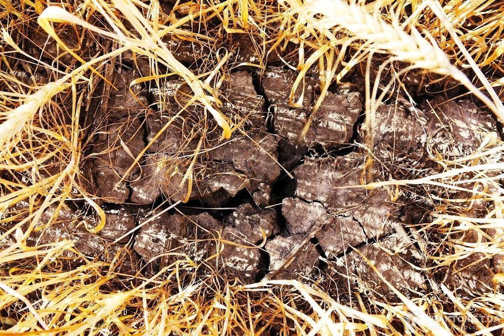 Стан ґрунту пшеничного поля