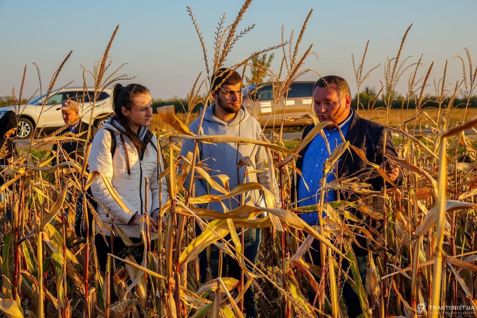 Посеред кукурудзи в полі «Шансу»