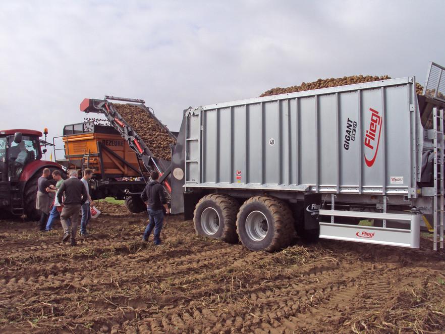 Fliegl Pom-Over під час збирання картоплі